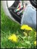 dandelionhill userpic