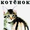 teh j00: kitten