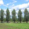asadori userpic