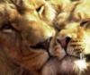 tigermind: Fierce gentleness