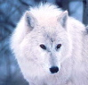 blackriverwolf userpic