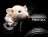 mouse_nsk userpic