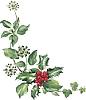 Holly ivy and misteltoe