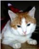 festive cat2