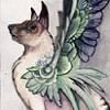 winged kitty
