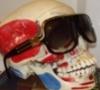 Millionaire skull