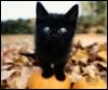 hummy_cat userpic