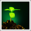 plant by obsessiveicons