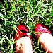 viv's red shoes