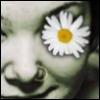 daisybones