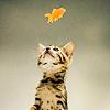 inlifewetrust: Cat -- Fleur