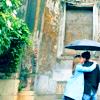 iconista: umbrella