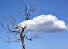 derevo-oblako