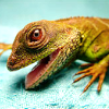 Talitha: jillicons rawr lizard