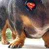 Talitha: jillicons superdog