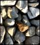 hautausmaa userpic