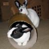 roro and truffie tube