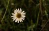 antennaria_sp userpic