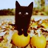 Katie: Kitten → cuteee