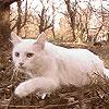 fon_lasting_cat userpic
