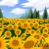 calm, sunflowers