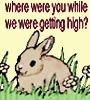 rabbitinthemoon userpic