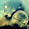 Seals by jackshoegazer