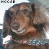 moussedog userpic