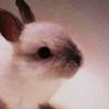 Plot Bunnies available for all Fandoms alike!