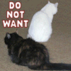 Do-Not-Want Cats