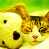 Cute kitten & bear by fiona_adam