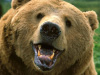 Animal: Grin and Bear it