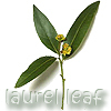 Loriel Eris: laurel leaf