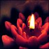 lotus - jiatra