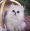 MEG: kitteh
