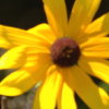 applelucynot userpic