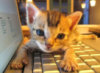 so cutie