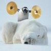 fearless penguin