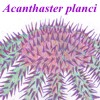 acanthaster userpic