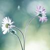 tinten_herz userpic