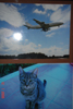 Глория Мунди - транзитом: кошка и самолет
