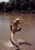 крокодилл