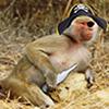 wonton_monkey userpic