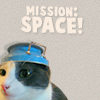 kitty space
