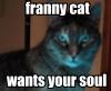 Franny cat