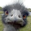 squeemu userpic