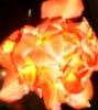 тюльпоцвет