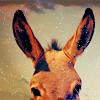 bighooves userpic