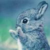 Animal - bunny