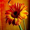 loveshotdreams userpic